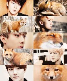 Animal edit - Fox - EXO/Sehun