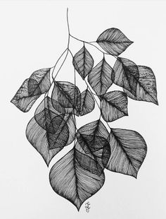 Original ink drawing for sale, incld shipping. The leaves of the tree, which contain lots of vitamin C, are used to… Zantangle Art, Art Mural, Pen Art, Art Sketches, Art Drawings, Motifs Art Nouveau, Leaf Drawing, Arte Sketchbook, Abstract Line Art