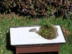 Simple tray garden/landscape. by KittyrinnAiko on DeviantArt