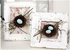 bird nests in frames...