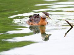 cute-bird-parents-251__700