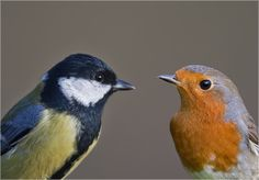 Vögel am Futterplatz