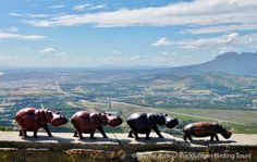 Curios, Sir Lowrys PAss_Sa VI South Africa Wildlife, Cape, Have Fun, African, Tours, Artist, Animals, Beautiful, Mantle