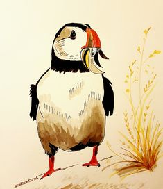 Puffin having a snack drawn in ink Sketches, Drawings, Painting, Illustration Art, Ink Drawing, Art, Ink, Draw
