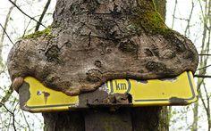 Bäume fressen Straßenschilder. Road sign-eating trees.