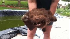 This video was first posted in 2012, but has recently begun to trend because c'mon… LOOK AT THAT FACE. | Watch This Dog Have The Time Of Her Life With A Leaf Blower Pointed Right At Her Face