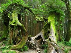 Greeness...