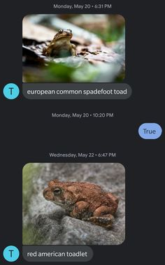 Unknown Number Starts Sending This Guy Toad Pics Without Any Context, Hilarity Ensues
