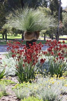 21 Ideas landscaping ideas front yard australia drought tolerant for 2019 garden landscaping 21 Ideas landscaping ideas front yard australia drought tolerant for 2019 Australian Garden, Dry Garden, Front Yard Landscaping, Australian Plants, Front Gardens, Australian Native Garden, Bush Garden, Plants, Front Garden Design