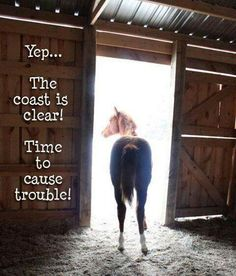 Time to cause trouble! Does your #horse ever think like this...?