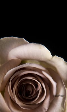 'amnesia' rose - a rosey taupe colour. very vintagey and very gorgeous Floral Wedding, Rustic Wedding, Wedding Flowers, Amnesia Rose, Ronsard Rose, Bedroom Colour Palette, Lavender Roses, Pink Flowers, Rose Trees