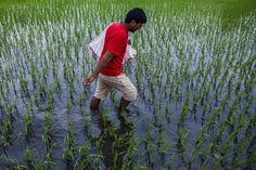 CARLOS  -  Professor  de  Geografia: Soberania alimentar: 5 passos para esfriar o plane...