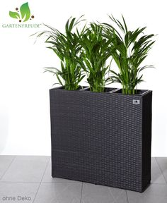 schale vase amphore pflanzk bel stein farbe sandstein garden pinterest vase. Black Bedroom Furniture Sets. Home Design Ideas
