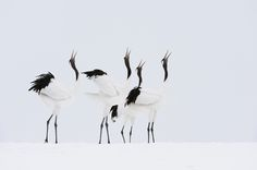 A Cappella by Marsel van Oosten on 500px