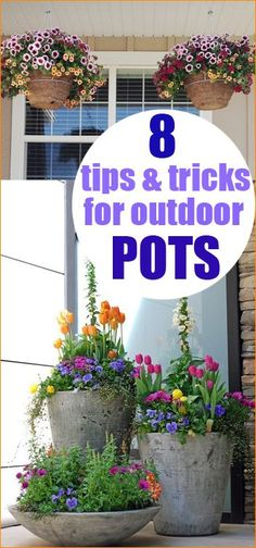 8 Tips and Tricks for Outdoor Pots. Beautify your home with colorful pots of flowers. All the tips and tricks you need to know to keeping your plants thriving and alive. Perfect gift for MOTHER'S DAY! Ways to grows perfectly potted outdoor plants. Container Plants, Container Gardening, Gardening Tips, Organic Gardening, Container Flowers, Gardening Gloves, Plant Containers, Gardening Services, Gardening Courses