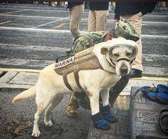 Ella es Frida. Ha localizado 52 personas. Es un Angel es un HÉROE. #terremotomexico #terremoto #rescate #perros #dog #cdmx #mexico