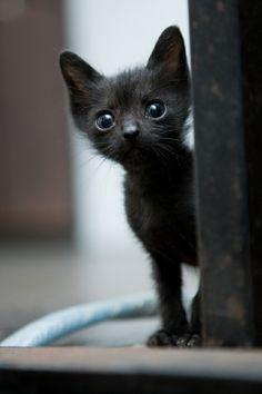 Aww teeny black kitty.