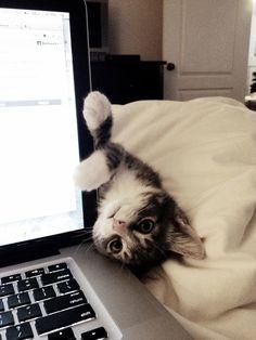 cat:HI!!!!! human:your blocking my time!!!!!!!!!!!!!!!!!!!!!!!!