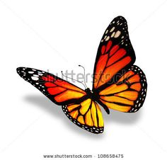 Yellow-orange butterfly, isolated on white background - stock photo