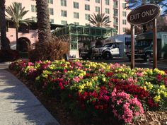 Winter in Florida is a great time to use brightly colored annuals!