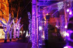 A Chinese security guard is seen in his booth among trees decorated with Christmas lights outside a shopping mall in Beijing, China, Dec 17. While few Chinese celebrate the religious side of the Christmas holidays, many enthusiastically get into the shopping and gift giving tradition, granting much cheer to the retail industry during this period. (HOW HWEE YOUNG/EPA)