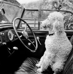 I like to sit in the car, but I hate road trips. I tend to shiver, shake & cry.......