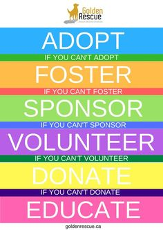 There are so many ways you can make a difference in the life of a Golden. #goldenretriever #rescuedog #adopt #foster #volunteer #donate #educate #sponsor Rescue Dogs, Animal Rescue, Teen Volunteer, Volunteer Services, Charity Organizations, Website Template, The Fosters, How To Become, Adoption