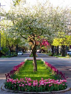 The Streets of Holland Michigan,By: rkramer 62 @Flicke- Photo Sharing - Pixdaus