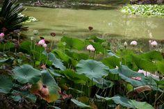 brewbooks - Japanese Garden, Lotusland