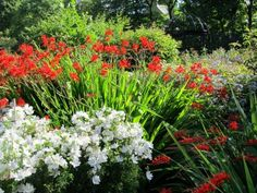 Edinburg - Botanická zahrada (80 pieces) Edinburgh, Puzzle, Plants, Puzzles, Riddles, Planters, Jigsaw Puzzles, Plant, Planting