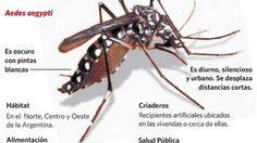 Dengue. Un mosquito peligroso.