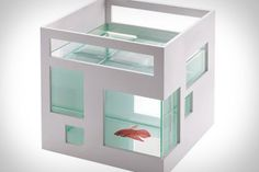 umbra fish hotel. best fishbowl ever? get this, it's stackable, so you can have a full set of fish condos.