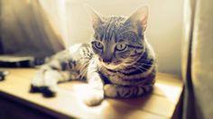 Tilly - www.ataleoftwocats.co.uk Trending Memes, Funny Jokes, Dog Cat, Cats, Gatos, Husky Jokes, Cat, Jokes, Kitty