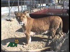 Detened el Sufrimiento en el Circo (Spanish)