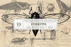 Antique Insect Vector Graphics by Eclectic Anthology on @creativemarket
