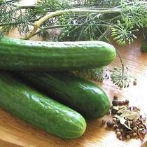 Hungarian Summer Pickles. My father makes these each year.