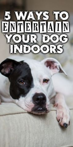 Whether it's cooler temperatures, longer nights, or the wet, snowy weather, many families - and that includes our furriest family members - will spend more time indoors this time of year. When stuc...