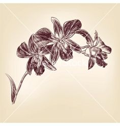 Floral orchid hand drawn vector 1812706 - by vladischern on VectorStock®
