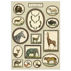 Natural History Animals Wrap