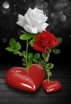 Red rose with white rose Love Heart Images, Love You Images, Rose Images, Beautiful Love Pictures, Romantic Pictures, Heart Wallpaper, Flower Wallpaper, Romantic Roses, Beautiful Roses