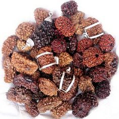 Wear Rudraksha with all siddhikarad to remove the hurdle and obstacle from life.
