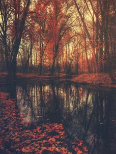 Buy Where are you? Autumn Fall - Autumnal forest Art Print by originalaufnahme. Worldwide shipping available at Society6.com. Just one of millions of high quality products available.