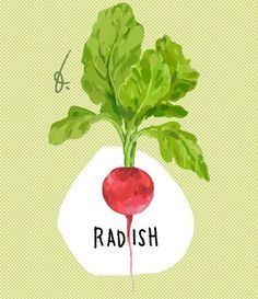 Radish, a vegetable.