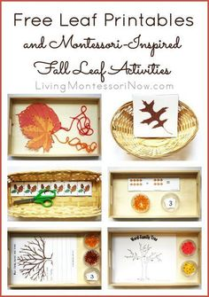 Long list of free leaf printables along with ideas for creating Montessori-inspired fall leaf activities using free printables