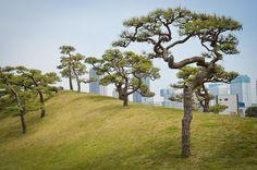 Hama-rikyū Garden 浜離宮 Tokyo