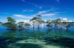 Blogilha-downloads: Download papel de parede Ilhas rochosas de Palau /...