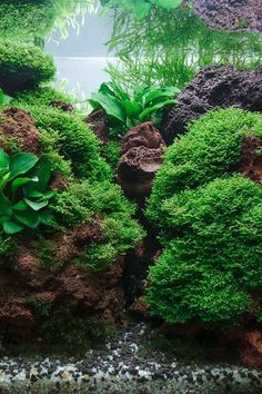 Aquarium- I'm impressed- I usually am tired of the lava rock look except with African cichlids.