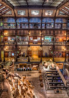 One of the coolest museums in the world, the Natural History Museum in Paris, Grand Gallery of Evolution.