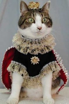 A regal cat.