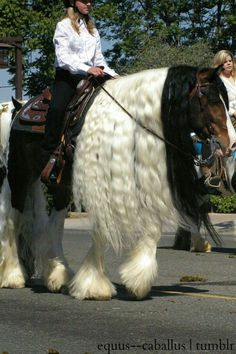 Nice tall horse with long manes